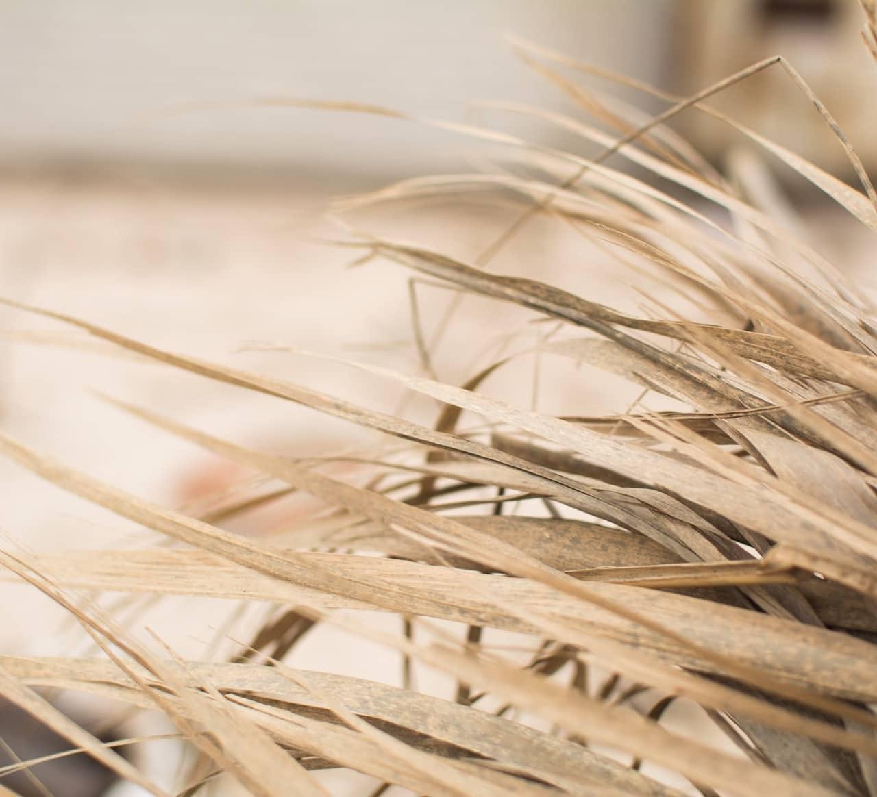 Herbe sèche pour pied de page